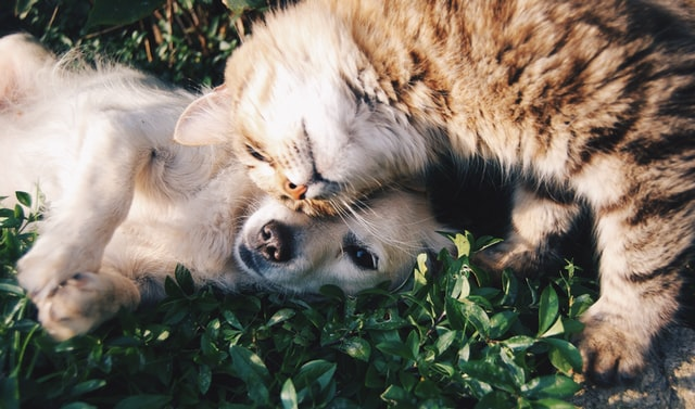 210520 Dogs cats