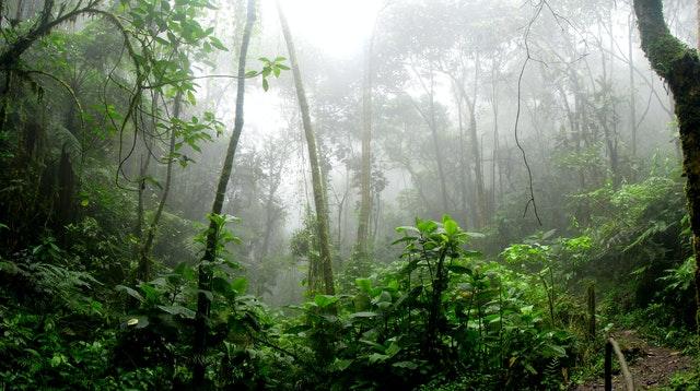 010720 Rain Forest