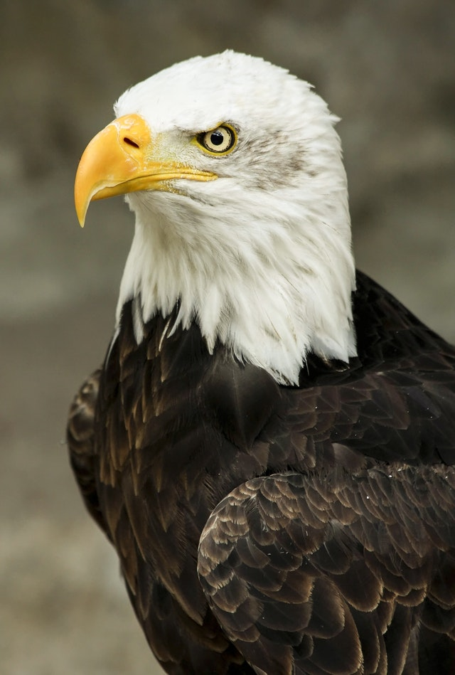 100820 Eagle
